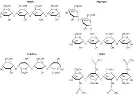 Biological Macromolecules Chart 2 3 Biological Molecules Concepts Of Biology 1st