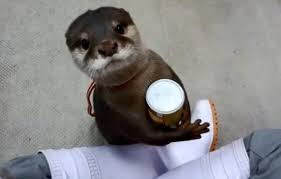 Otter Vending Machine Mesmerizing Video Archives Page 48 Of 48 Daily Picks And Flicks
