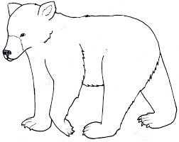Kermode Bear Coloring Page Printable Animal