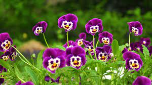 Flowers HD Wallpaper For Free Download
