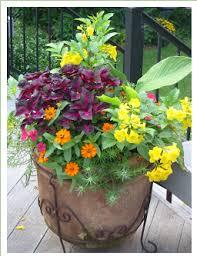 Small Picture Full Sun Plant Combos Esperanza Tecoma stans Perilla Magilla