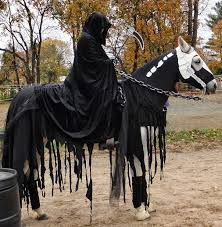 costumes for horses creative ideas for pet costumes decoration 1 20