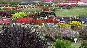 color garden. Color Trials Garden