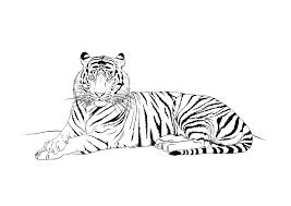 Coloriage Tigre Les Beaux Dessins De Animaux Imprimer Et Colorier
