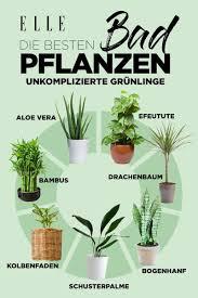 Luftverbesserer Diese Pflanzen Sind Super Für Die Wohnung Blumen