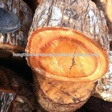 Eucalyptus Firewood Fundacionesperanzaviva Com Co