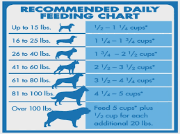 How Much Food Should You Feed Your Dog Animals Focus