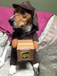 Ups Dog Costume Size Chart Ups Dog Costume