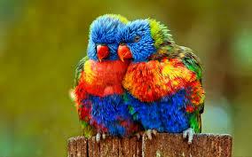 rainbow animal wallpaper. Unique Wallpaper HD Wallpaper  Background Image ID492674 2389x1493 Animal Rainbow Lorikeet With