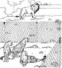 Dierentuin Kleurplaten Leeuw