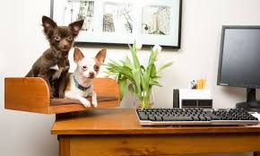 your home office. contemporary office bonus donu0027t forget your furries for home office c