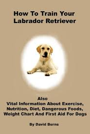 How To Train Your Labrador Retriever Also Vital Information