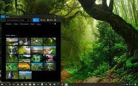 Amazon Rainforest theme for Windows 10 ...