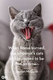 Funny Quotes About Cats Marvelous Kitten Tap The Link Now All