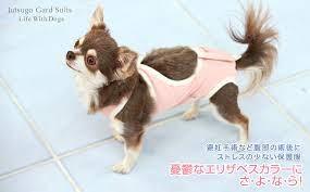 犬 の 避妊 手術 後