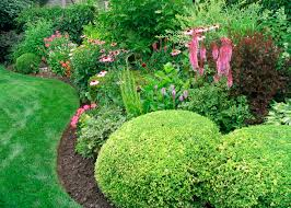 Small Picture Landscaping Trees and Shrubs Ideas Design Ideas Decors