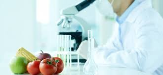 What Can You Do With A Food Science Degree Top Universities
