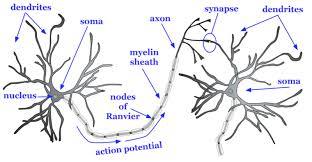 Neurons Noba