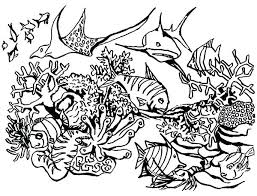 Coral Reef Coloring Page Swordfish Between Coral Reef Coloring Page