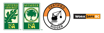 you can feel assured that robs tree care will handle your project with professionalism and care starting from the free estimate to final clean up at robs tree service c96