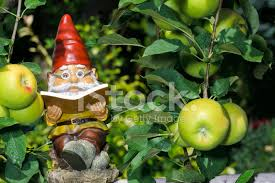 garden gnome reading book in apple tree