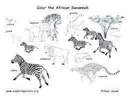 desert animals coloring pages to color on luxury animal printable free