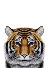 tiger face poster by fox republic