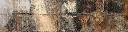 how to remove mold from tile grout and