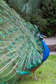 los angeles county arboretum and botanic garden 5