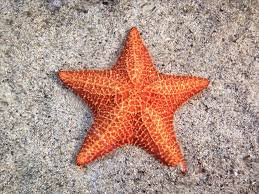 fascinating facts about sea stars