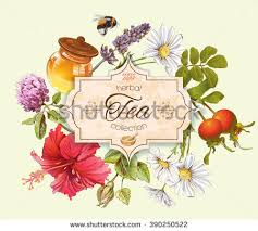 Small Picture Herbal Background Stock Images Royalty Free Images Vectors