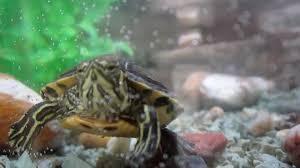 Acquario tartarughe 250 lt di adriano 2016 10 10
