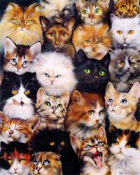 cats collage wallpaper. Interesting Wallpaper Cat Collage Wallpaper 0072 On Cats Collage Wallpaper