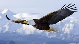 Resultado de imagen de ave volando alto