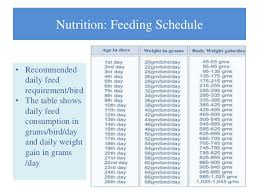 Weight Chart For Show Broilers Broiler Management