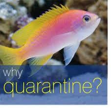 Mardel Fish Disease Chart 58 Best Fish Disease Treatment Images Fish Tanks