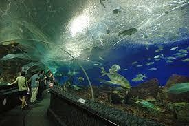 Underwater world Singapore Been thereDone that Pinterest