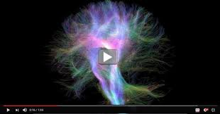 cool videos starring the wiring diagram of the human brain nih the human brain contains distinct geographic regions that communicate throughout the day to process information such as remembering a neighbor s or