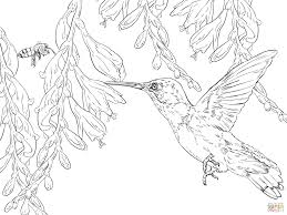 Print pictures of series star wars, space and rio that are suitable for children too. Birds Coloring Pages For Adults