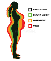 Underweight Normal Overweight Obese Chart Woman Body Mass Index Bmi Categories Stock Vector