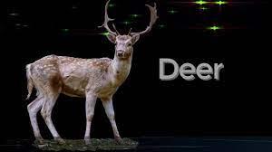 spiritual meaning of hitting a deer