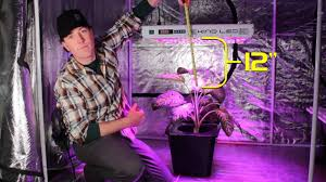 How Close To Keep Led Grow Lights How Far Should Your Grow Light Be From Your Plants Kind Led Grow Lights