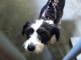 wire hair terrier mix breeds. Modren Breeds Burns2 On Wire Hair Terrier Mix Breeds