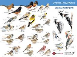 17th Annual Great Backyard Bird Count And Where To Bird Watch On Backyard Bird Watch