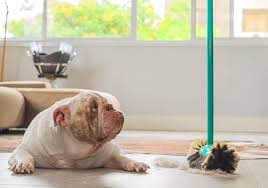 bulldog resting on hard tile floor while hair and fur is being swept up around him