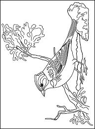 Vogel Kleurplaat Jouwkleurplaten
