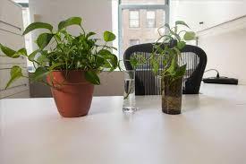 plants for office cubicle. Plants For Office Cubicle Guzmania Potted Plant Ikea; D Officecubicle Decor Garden Chronicles E