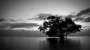 Black And White Wallpaper 4k - Images ...