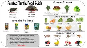 Pin By Cutest Turtles Tortoises On Painted Turtle Care