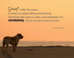 Loss Of Pet Quotes Classy Pet Loss Quotes To Help You Through Grief Of Losing Your Dog